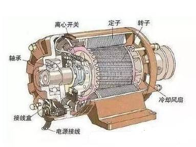 交流电动机结构示意图.jpg
